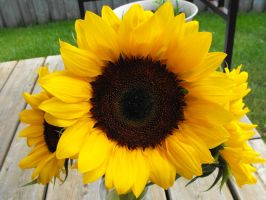Sunflower by Eisoptrophobic-stock