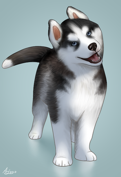 Husky pup by LuminousDazzle