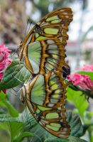Butterfly Exposition (12) by Mocris