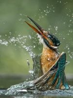 Shake it off and start over by Jamie-MacArthur