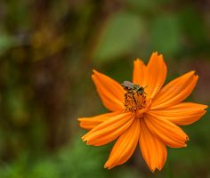 A Wildflower and a Bee by JessicaDobbs