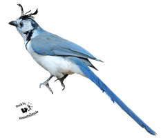 Cut-out stock PNG 105 - blue magpie jay by Momotte2stocks