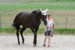 Black Warmblood Mare Leading by LuDa-Stock