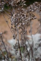 DSC 0017 Silver and Gold 2  by wintersmagicstock