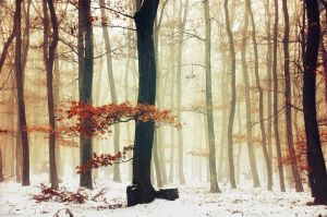 Winter Woods IX. by realityDream