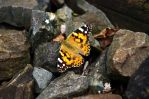 Butterfly on the Track Bed by zergy79