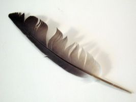FREE STOCK, Gothic Feather 4 by mmp-stock