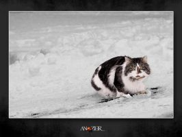 SNOW CAT by ANOZER