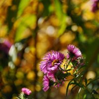 colours of autumn XXII by Wilithin