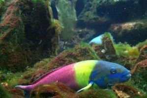 My Little Rainbow Fish by AtomicColor