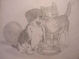 n'aww cat and dog X3 by DragbaX