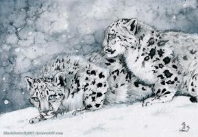 Snow Leopard Kittens by Si3art