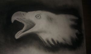 eagle by GeertY