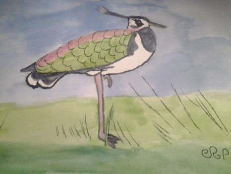 A lapwing.  by Dragonmaster003