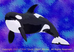 Killer Whale by quicksilverstudios