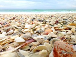 Shells On The Shore by JMPorter
