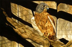 Sepia Falcon by Siluan