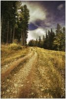 The Path We Choose by Argolith