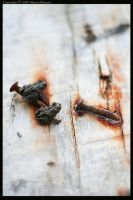 Two Toads Two Nails by wroth