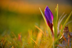 Spring is just around the corner by Equilis