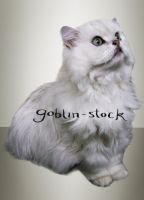 White Cat_cutout_3 by GoblinStock
