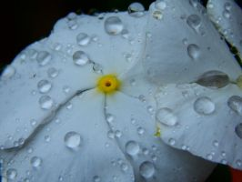 Water dropped flower by Worldboy1