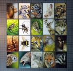 ACEO cards! by Heliocyan