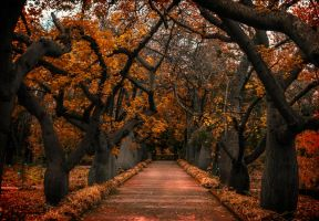 It shall be red by INVIV0