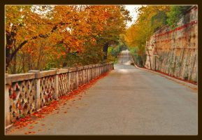 Autumn in Istanbul.. by bstwi