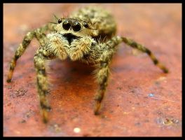 September Jumper by FramedByNature