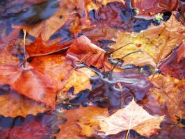 Autumn Leaves by Elva-Luthien
