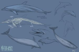 Bottlenose dolphins by kalambo