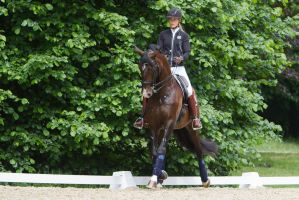 Lusitano Trot Renvers Stock by LuDa-Stock