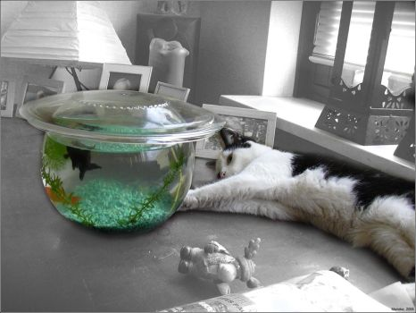 .:The Fish And The Cat:. by JollyM