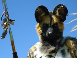 Up Close with a Wild Dog by Utunu