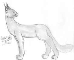 A Caracal by midnightkat91