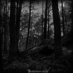The forest by CountessBloody