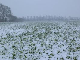 snow 13 by tegalus