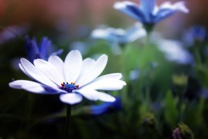 Little Flower. by Lyien
