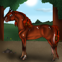 MFS Shaleh of Cendrillion 1624 by MorganFireStables