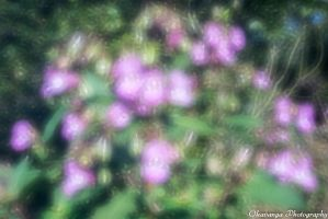 Zone Sieve Photography 6 - Flowers by Okavanga