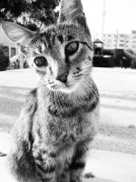 Black and white kitty by KtuAC