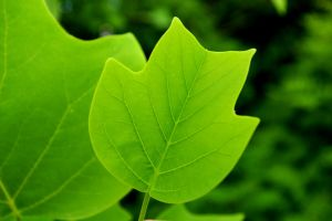 green as the hope by Mittelfranke