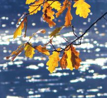 blue and yellow autumn by Iridescent-happinesS