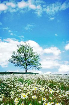 tree with daisies by ersi