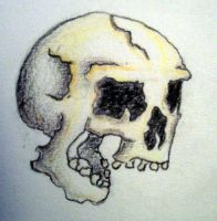 laughing skull by accomplicefarrell
