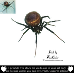 Spider png by TinaLouiseUk
