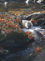 Lithia River in Autumn by botanystock
