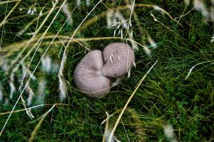 Mushrooms by Art-ography