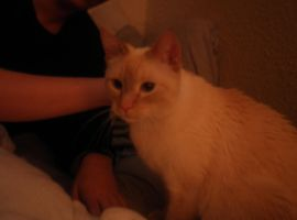 New Cat by Shiinsan23